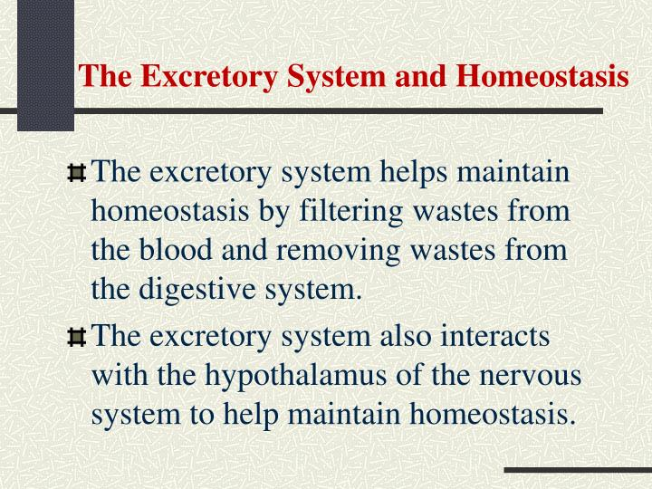 The Excretory System and Homeostasis