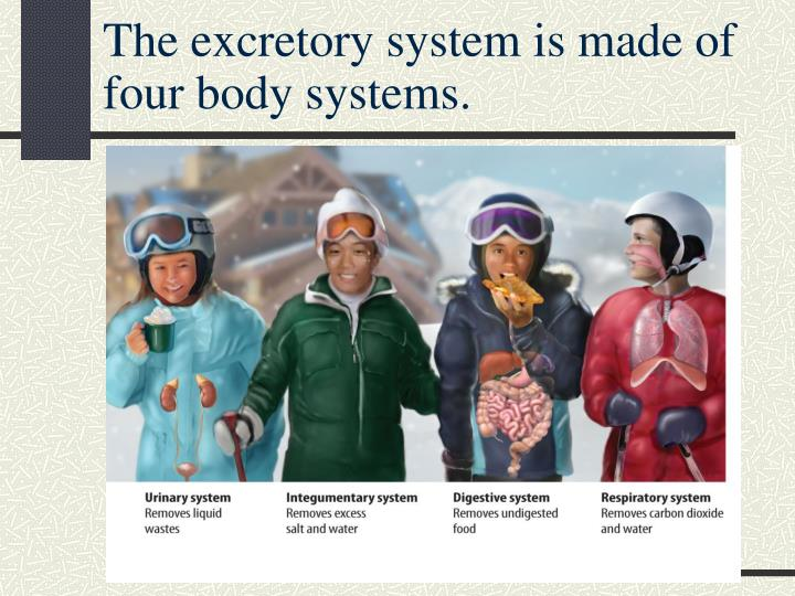 The excretory system is made of four body systems.