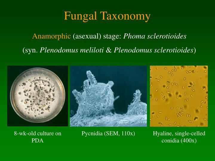 Fungal Taxonomy