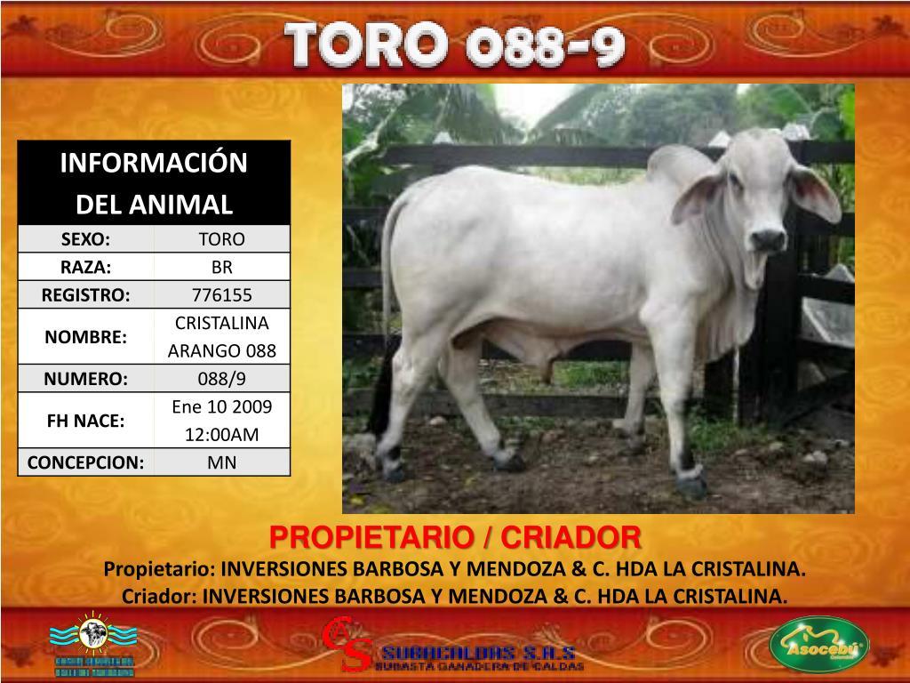 PROPIETARIO / CRIADOR