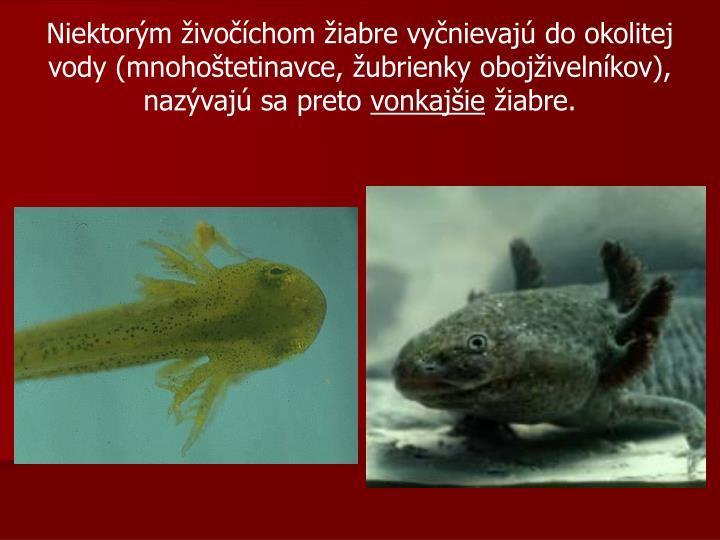 Niektorým živočíchom žiabre vyčnievajú do okolitej vody (mnohoštetinavce, žubrienky obojživelníkov), nazývajú sa preto
