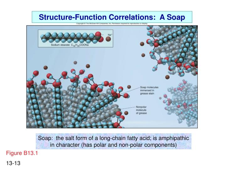 Structure-Function Correlations:  A Soap