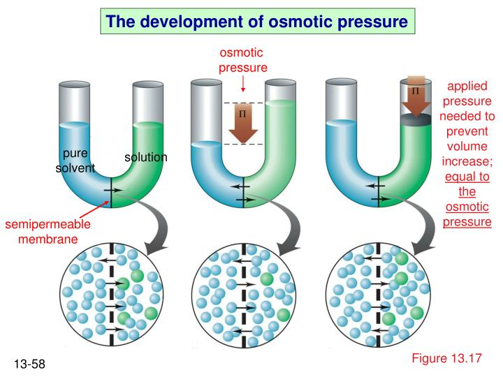 The development of osmotic pressure