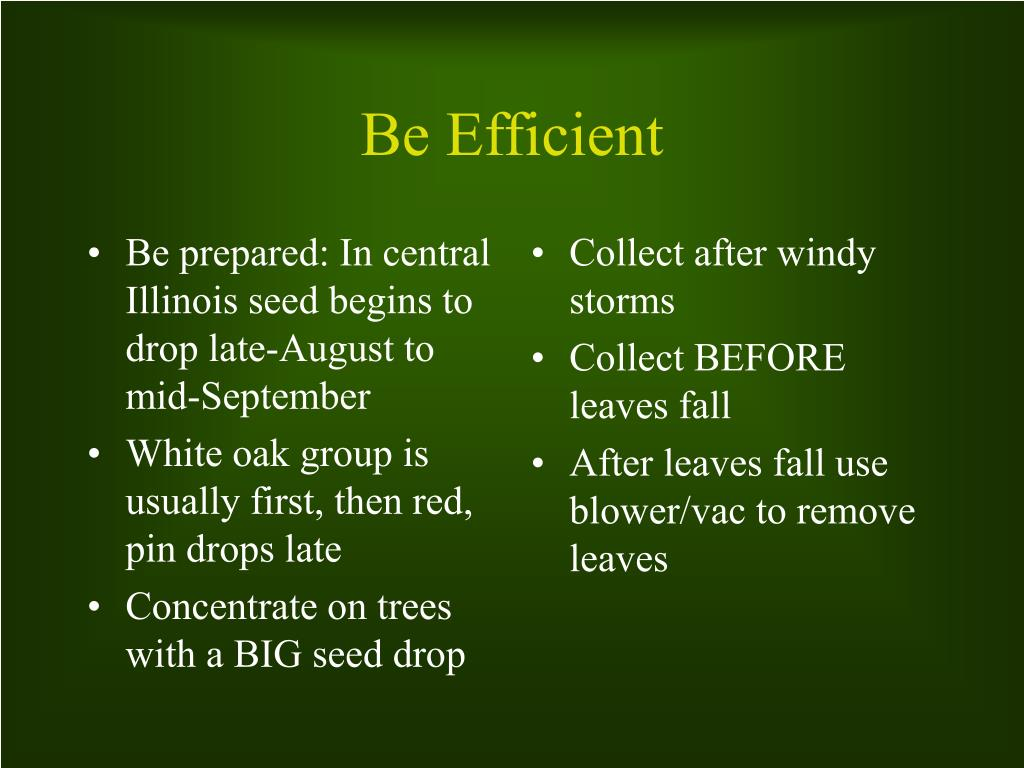 Be prepared: In central Illinois seed begins to drop late-August to mid-September