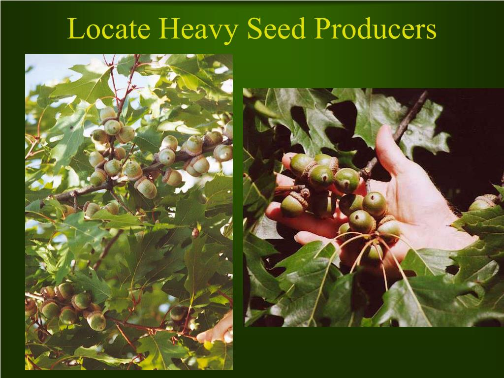 Locate Heavy Seed Producers