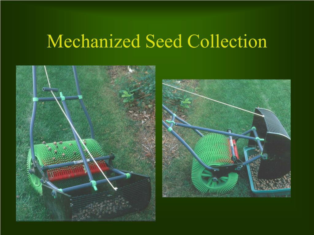 Mechanized Seed Collection