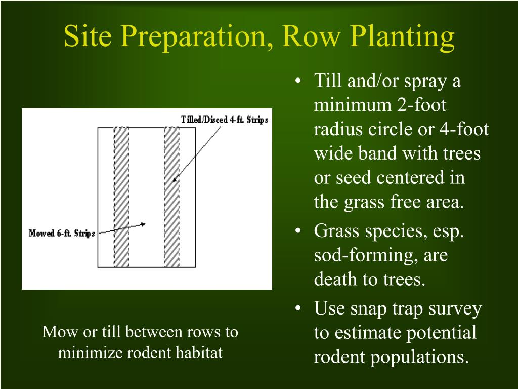 Till and/or spray a minimum 2-foot radius circle or 4-foot wide band with trees or seed centered in the grass free area.