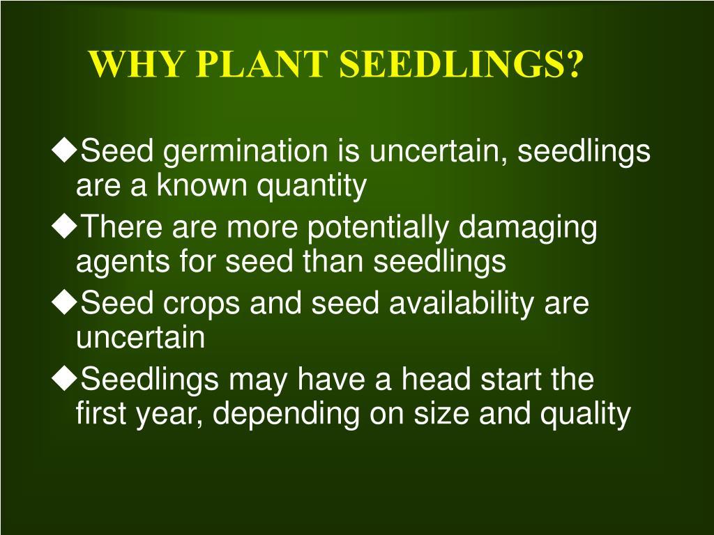 WHY PLANT SEEDLINGS?