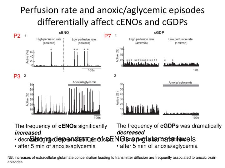 Perfusion rate and anoxic/aglycemic episodes differentially affect cENOs and cGDPs
