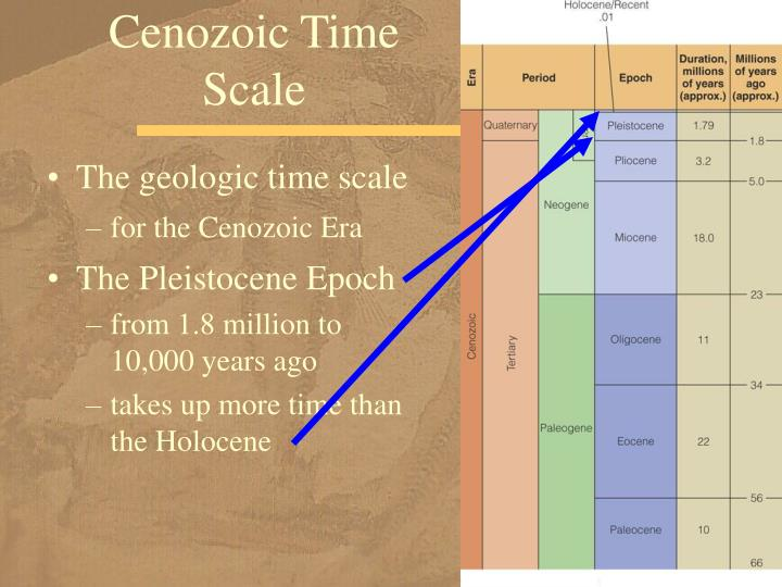 Cenozoic Time Scale
