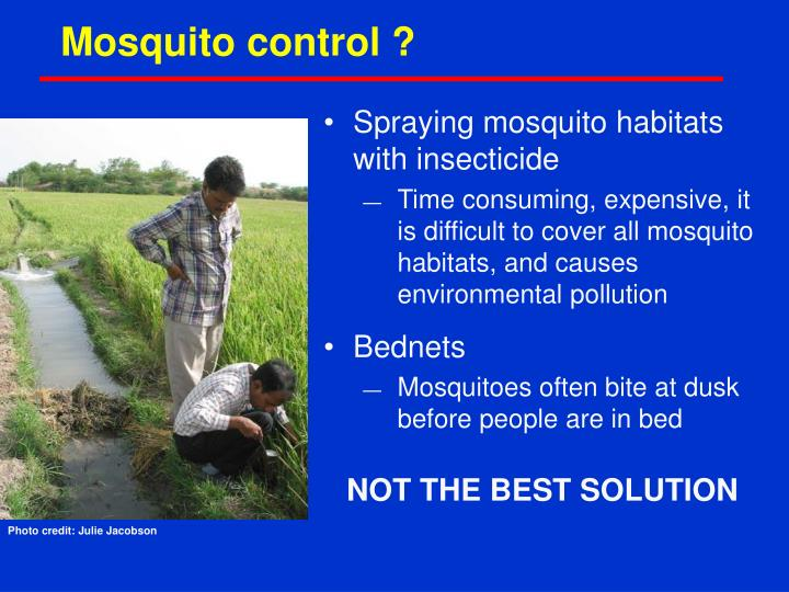 Mosquito control ?