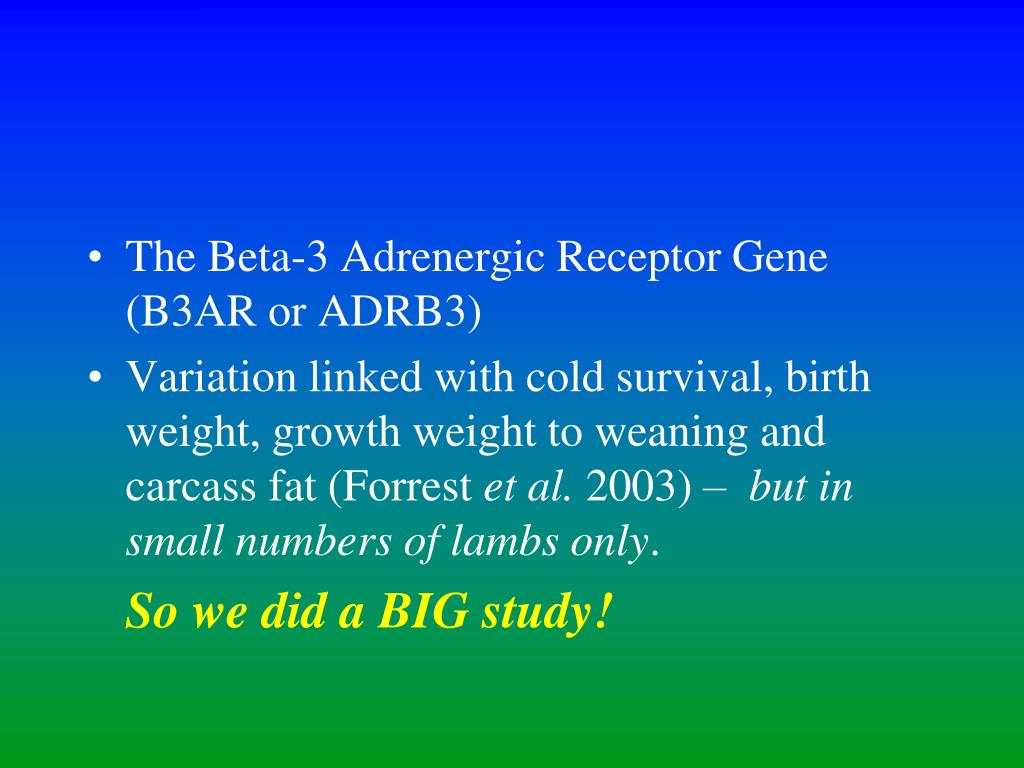 The Beta-3 Adrenergic Receptor Gene (B3AR or ADRB3)