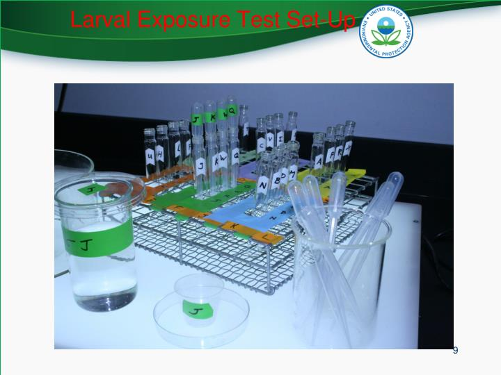Larval Exposure Test Set-Up