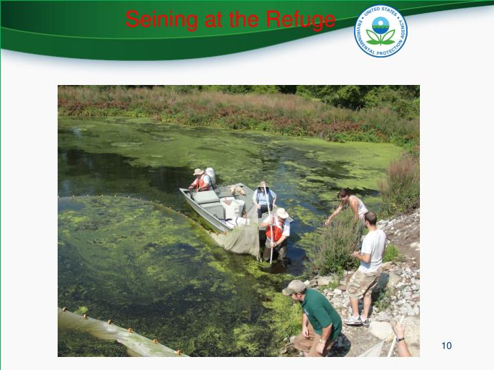 Seining at the Refuge