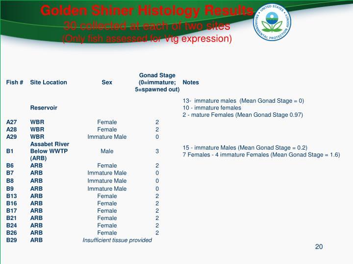 Golden Shiner Histology Results