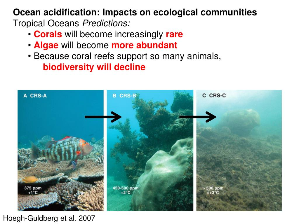 Ocean acidification: Impacts on ecological communities