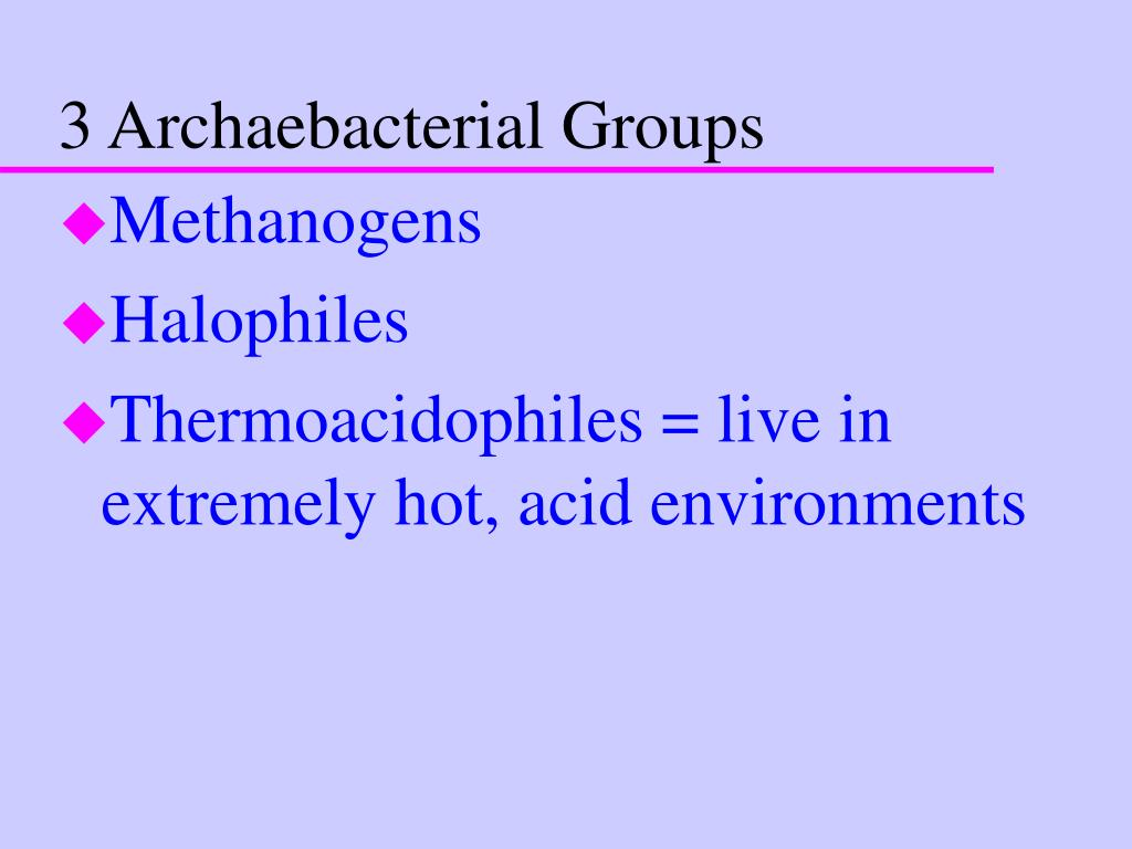 3 Archaebacterial Groups