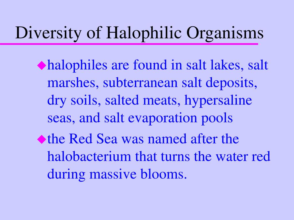 Diversity of Halophilic Organisms