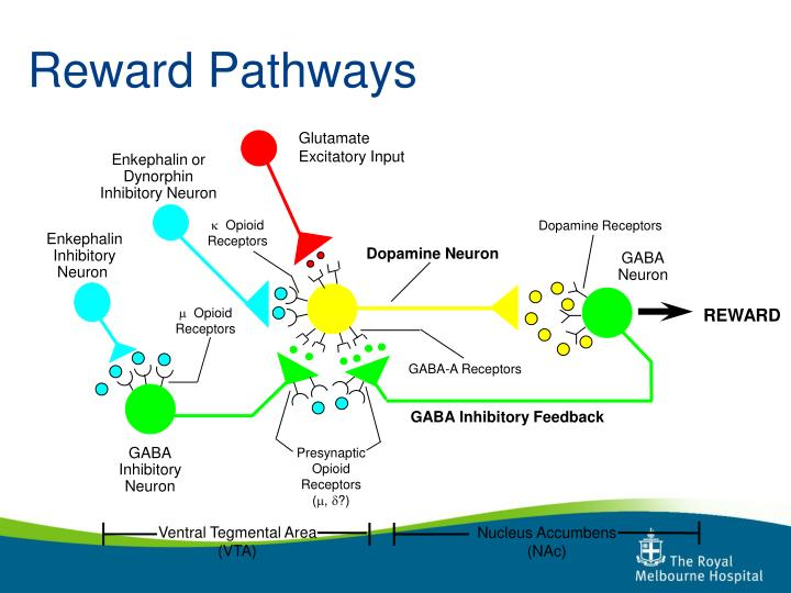 Reward Pathways