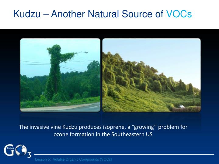 Kudzu – Another Natural Source of