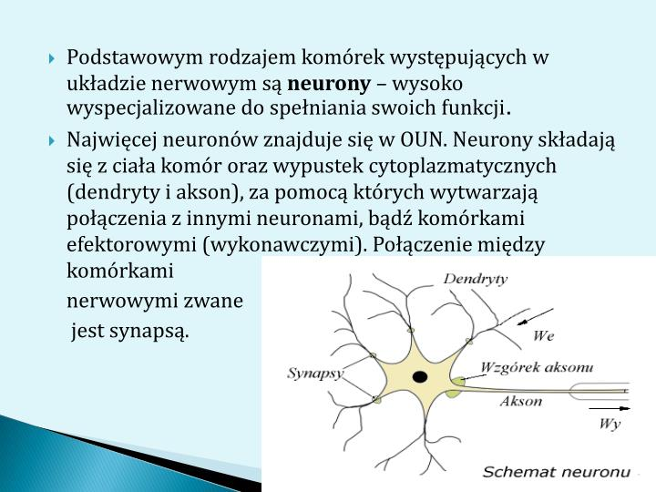 Podstawowym rodzajem komórek występujących w układzie nerwowym są