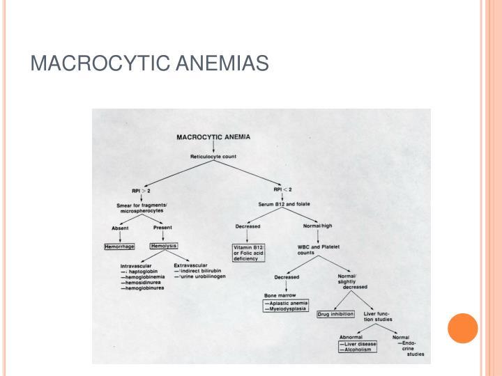 MACROCYTIC ANEMIAS