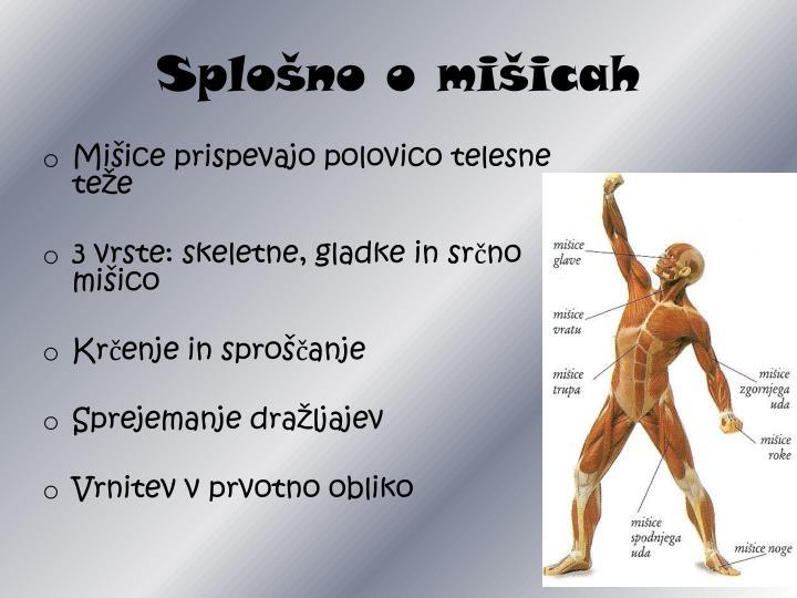 Splošno o mišicah