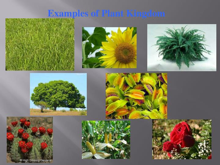 Examples of Plant Kingdom