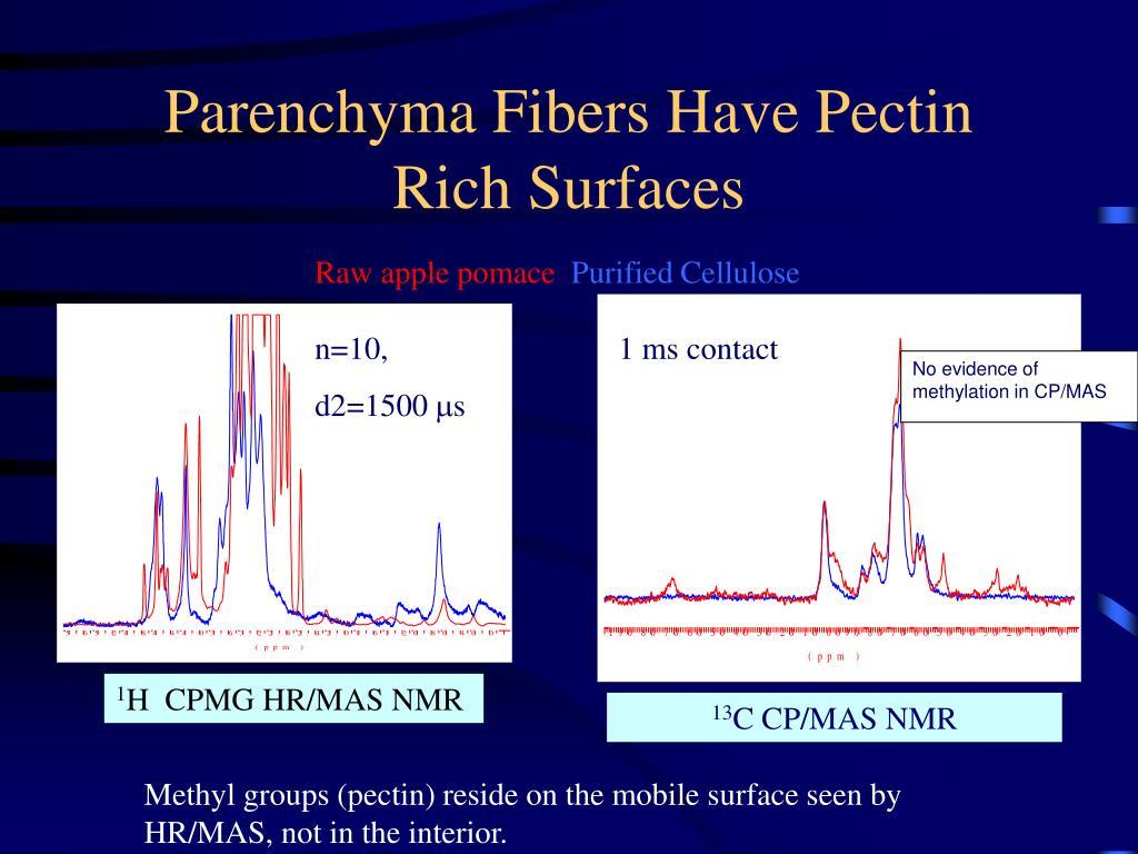 Parenchyma Fibers Have Pectin Rich Surfaces
