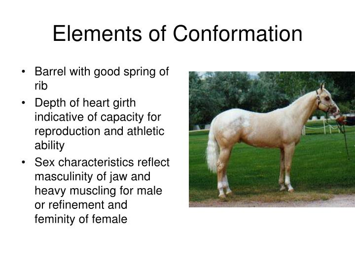 Elements of Conformation