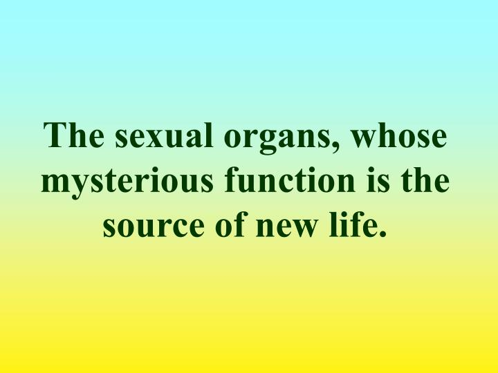 The sexual organs, whose mysterious function is the source of new life.