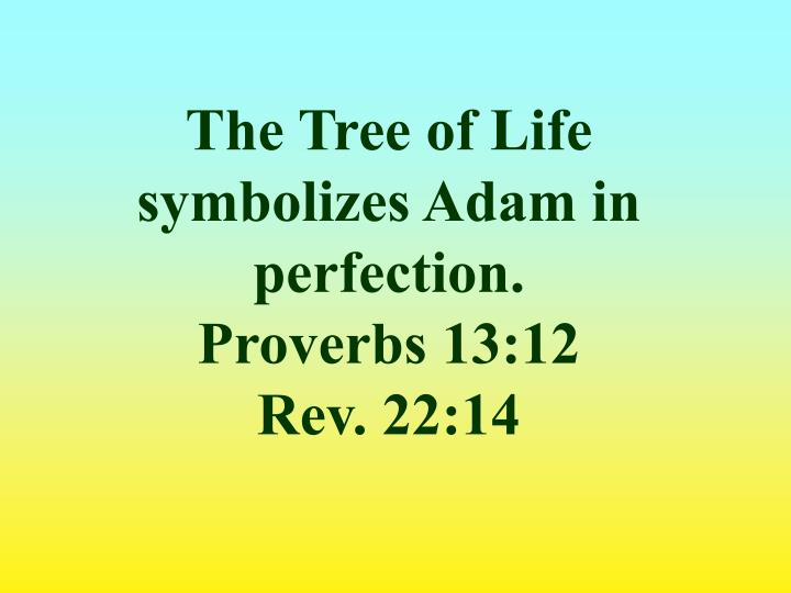 The Tree of Life symbolizes Adam in perfection.