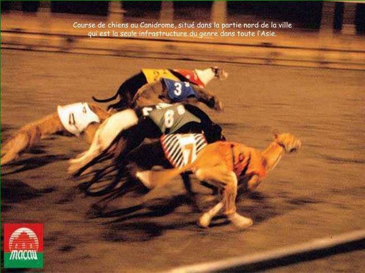 Course de chiens au Canidrome, situé dans la partie nord de la ville
