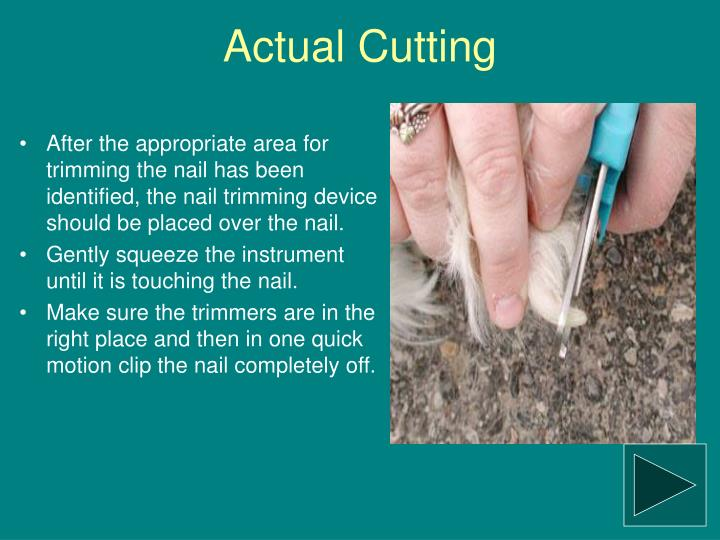 Actual Cutting