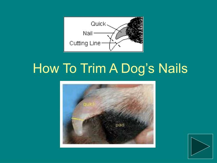 How to trim a dog s nails