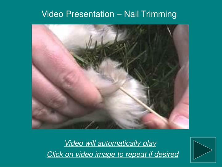Video Presentation – Nail Trimming