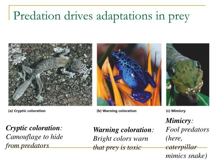 Predation drives adaptations in prey