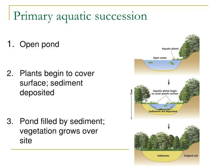 Primary aquatic succession