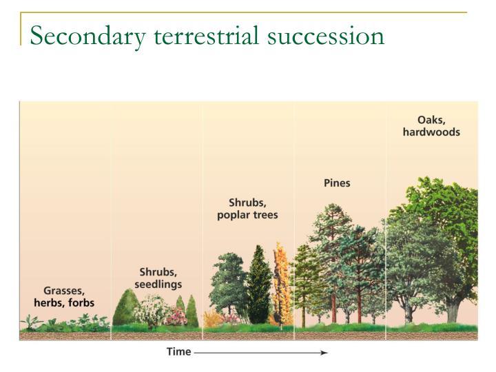 Secondary terrestrial succession