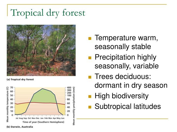 Tropical dry forest