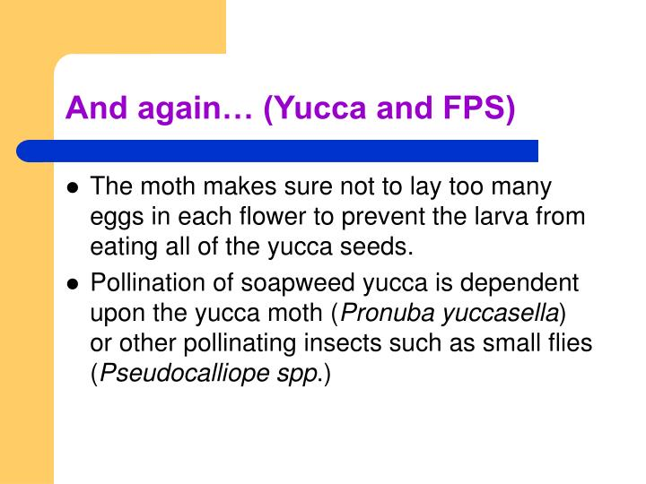 And again… (Yucca and FPS)