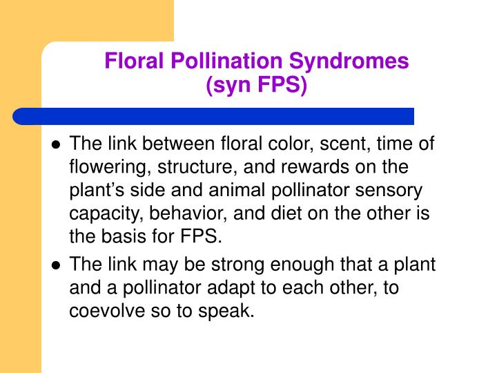 Floral Pollination Syndromes