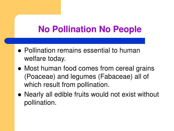No Pollination No People
