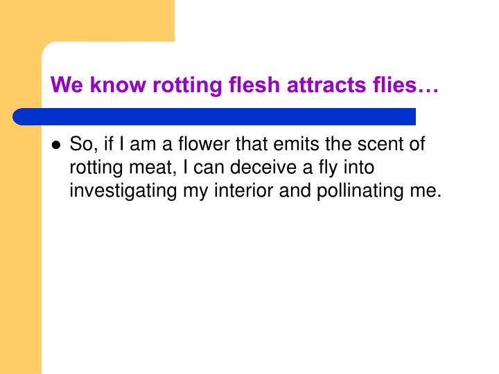 We know rotting flesh attracts flies…