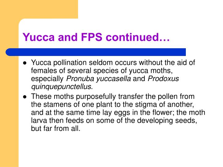 Yucca and FPS continued…