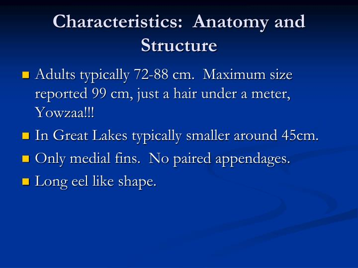 Characteristics:  Anatomy and Structure