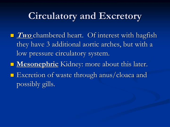 Circulatory and Excretory