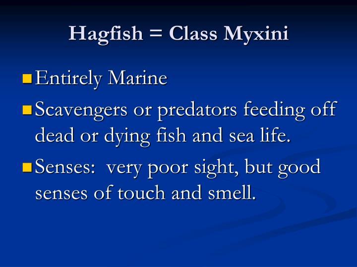 Hagfish = Class Myxini