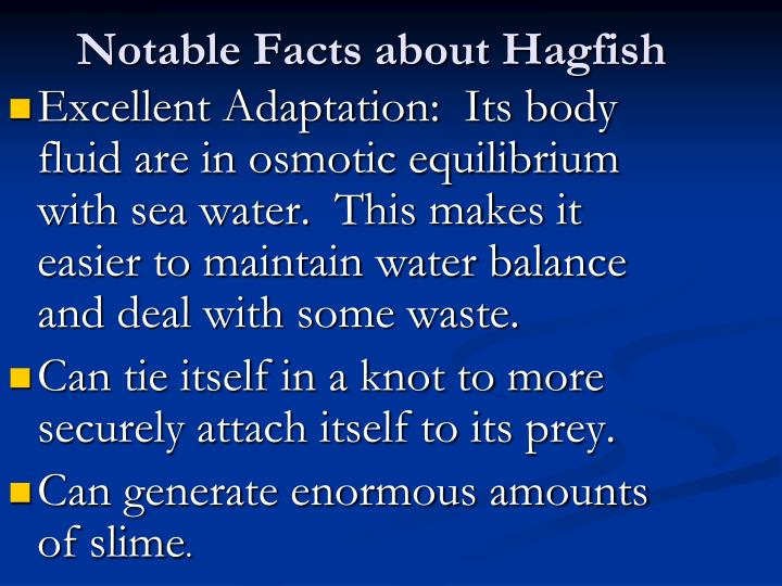 Notable Facts about Hagfish