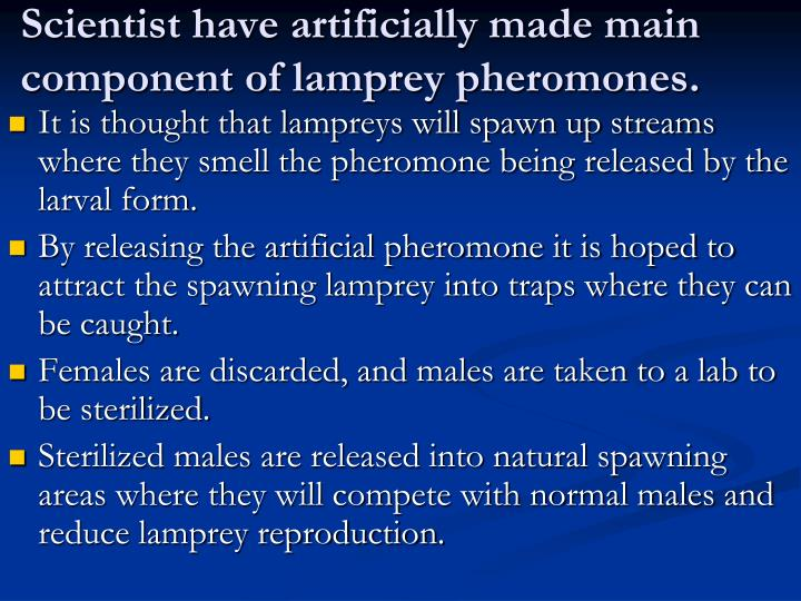 Scientist have artificially made main component of lamprey pheromones.